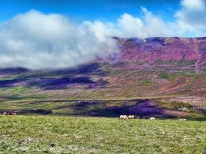 Eyjafjörður4