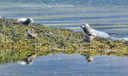 Seals2