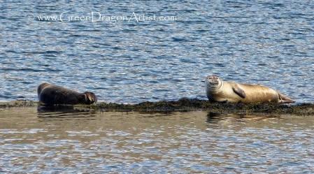 Seals4