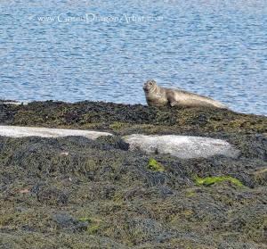 Seals5