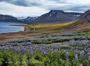 Westfjords50